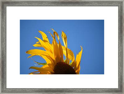 Blow Back Framed Print
