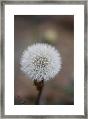 Blow Ball  Framed Print by Daniel Precht