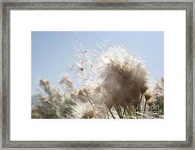 Framed Print featuring the photograph Blow Me Away by Julie Lueders