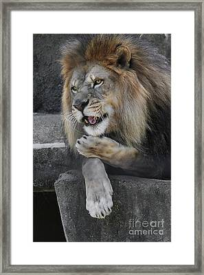 Blow You A Kiss Framed Print