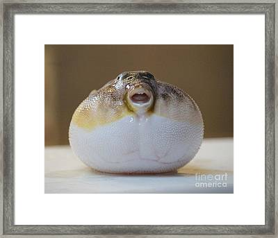Blowfish Framed Print