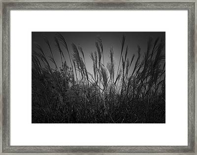 Blowin Framed Print