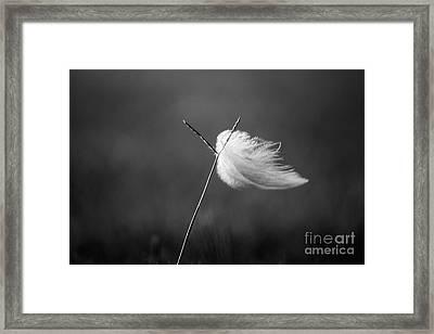 Blowin' In The Wind B W Framed Print