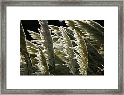 Blowing Free Framed Print