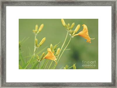 Blowing In The Breeze Framed Print by Lorraine Louwerse