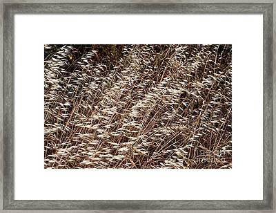 Blowing In The Wind At Delos Framed Print by John Rizzuto