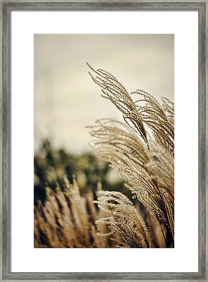 Blowing In The Wind Framed Print by Heather Applegate