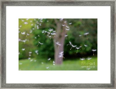Framed Print featuring the photograph Blowing In The Wind II by Jay Nodianos