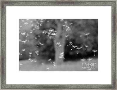Framed Print featuring the photograph Blowing In The Wind  by Jay Nodianos
