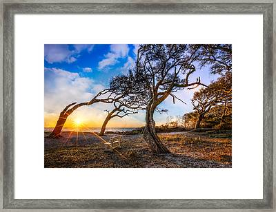 Blowing With The Wind Framed Print by Debra and Dave Vanderlaan