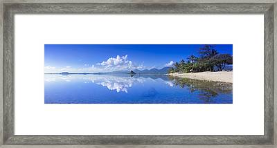 Blue Mokolii Framed Print by Sean Davey