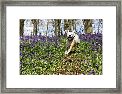 Blubell Charge Framed Print