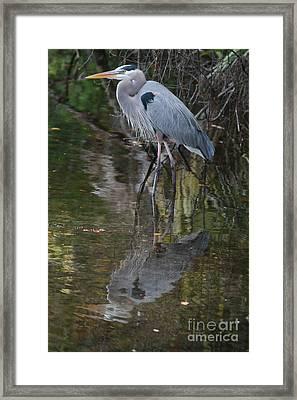 Blue 1212 Framed Print