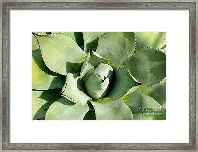 Blue Agave Framed Print