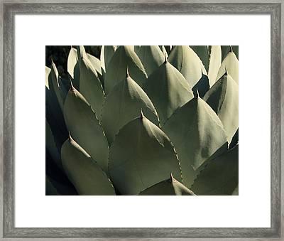 Blue Aloe Framed Print