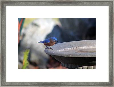 Blue And Brown Framed Print
