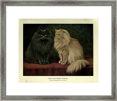 Blue And Cream Persians Framed Print by Philip Ralley