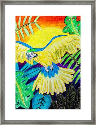 Blue And Gold Macaw Framed Print by Pati Photography