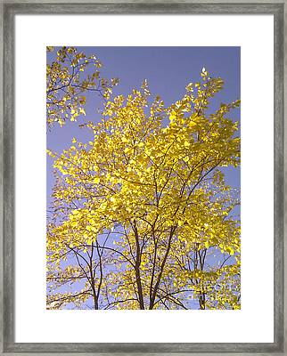 Blue And Gold Framed Print by Martin Howard