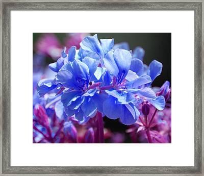 Blue And Purple Flowers Framed Print by Matt Harang