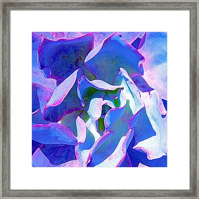 Blue And Purple Succulent Close Up Framed Print by Amy Vangsgard