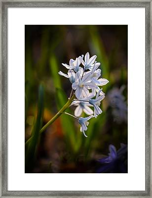 Blue And White Framed Print