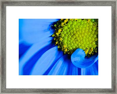 Framed Print featuring the photograph Blue And Yellow by Erin Kohlenberg