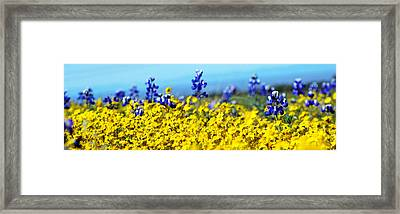 Blue And Yellow Wildflowers Framed Print