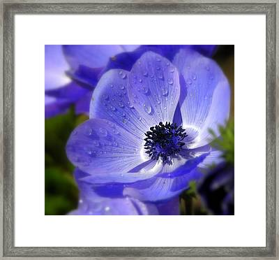 Framed Print featuring the photograph Blue Anemone by Martina  Rathgens