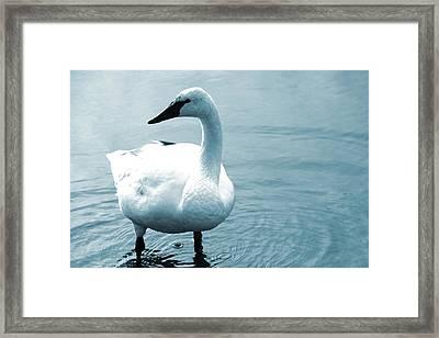 Blue Angel Framed Print by Munir Alawi