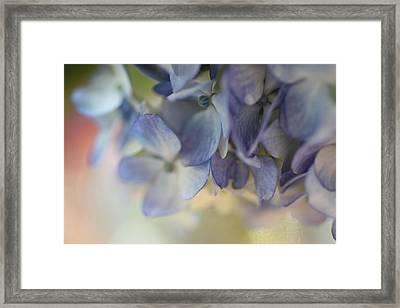 Blue  Framed Print by AR Annahita