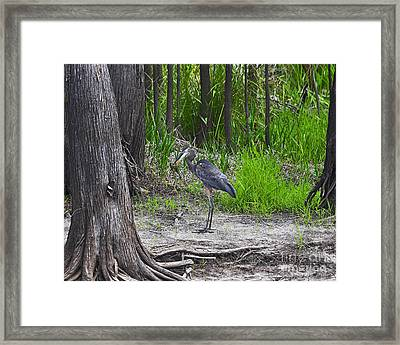 Blue Bags Bream Framed Print