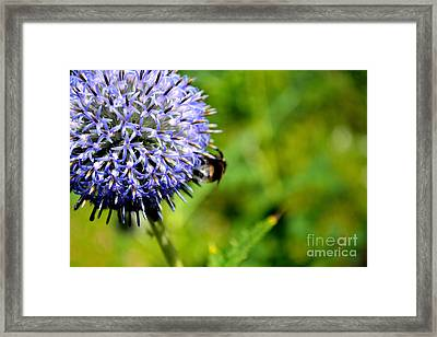 Framed Print featuring the photograph Blue Ball Flower by Scott Lyons