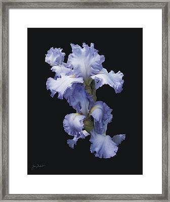 Blue Bearded Iris Framed Print