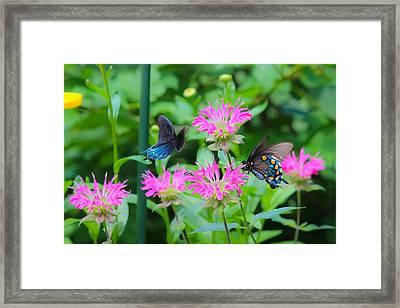 Blue Beauties Framed Print