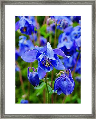 Blue Beauty Framed Print