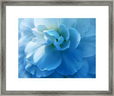 Blue Begonia Flower Framed Print by Jennie Marie Schell