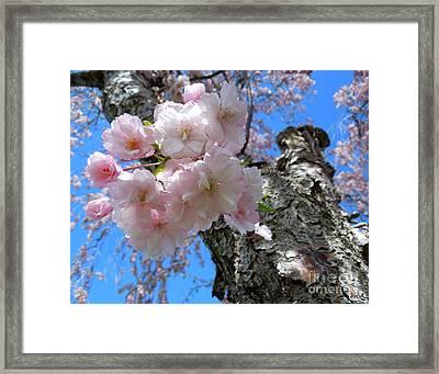 Blue Behind Pink Framed Print