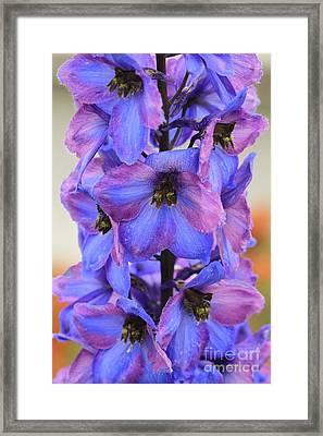 Blue Bell All Profits Go To Hospice Of The Calumet Area Framed Print