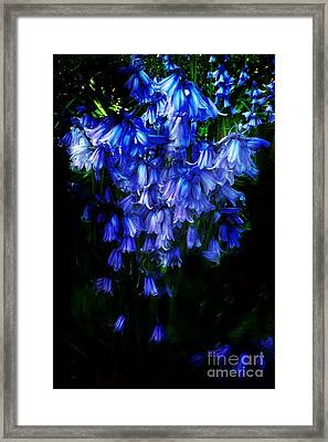 Blue Bells Framed Print by Scott Allison