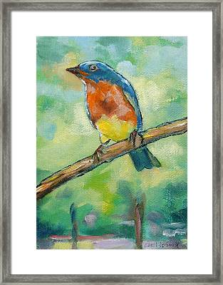 Blue Bird 2 Framed Print