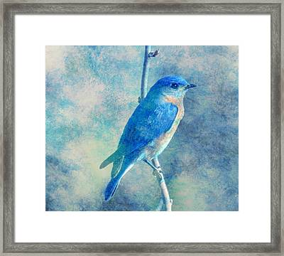 Blue Bird Blue Sky Framed Print