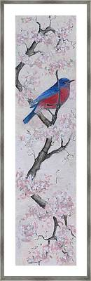 Blue Bird In Cherry Blossoms 2 Framed Print by Sandy Clift