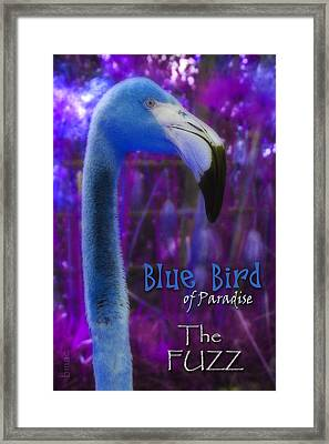 Framed Print featuring the photograph Blue Bird Of Paradise - The Fuzz by Barbara MacPhail