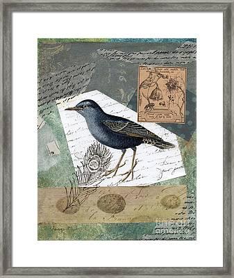 Blue Bird Study Framed Print by Tamyra Crossley