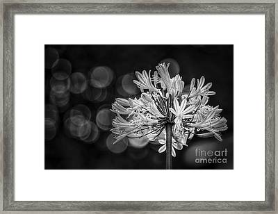 Blue Blooms B/w Framed Print by Marvin Spates