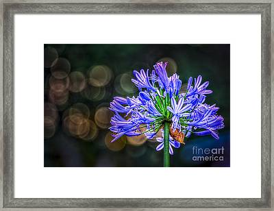 Blue Blooms Framed Print by Marvin Spates