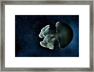 Blue Blubber Jelly Framed Print by Marianna Mills