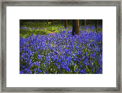 Blue Blue Bells Framed Print by Svetlana Sewell