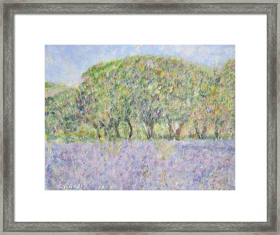 Blue Bonnets  Field In  Texas Framed Print